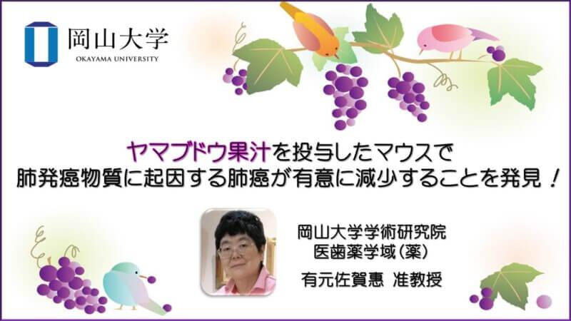 【岡山大学】ヤマブドウ果汁を投与したマウスで肺発癌物質に起因する肺癌が有意に減少することを発見!の画像